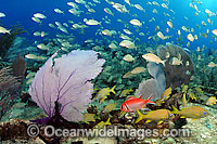 Fish and Coral Photo - David Fleetham