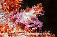 Candy Crab Photo - Gary Bell