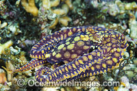 Mosaic Octopus Photo - Gary Bell