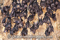 Fruit Bats in Bali Temple Photo - Gary Bell