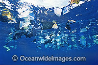 Marine Pollution plastic bags photo
