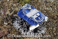 Marine Pollution on Sea Urchin Photo - Gary Bell