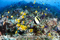 Fish and Coral Reef photo