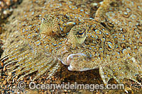 Leopard Flounder photo