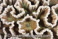 Coral detail Photo - Gary Bell