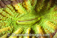 Cup Coral Photo - Gary Bell