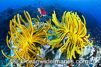 Fish Crinoids and Reef photo