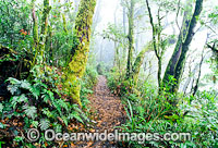Track Lamington Rainforest image