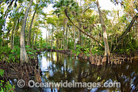 Loxahatchee River photo