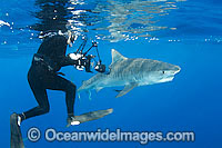 Tiger Shark and Underwater Photographer Photo - Gary Bell