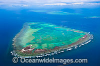 Heron Reef Wistari Reef Photo - Gary Bell