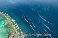 One Tree Island reef Photo - Gary Bell