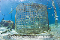 Cage holding live bait for sportfishing stock photo