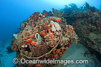 Reef Pollution rope and debris Photo - Michael Patrick O'Neill