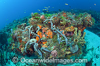 Coral Reef Florida Photo - Michael Patrick O'Neill