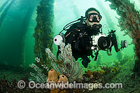 Scuba Diver under Jetty in South Australia Photo - Michael Patrick O'Neill