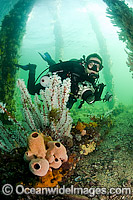 Scuba Diver under Pier in South Australia Photo - Michael Patrick O'Neill