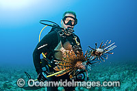 Scuba Diver with a catch of Lionfish photo