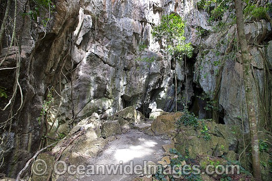 Capricorn Caves, showing the entrance to a large limestone cavern. Situated near Rockhampton, Queensland, Australia Photo - Gary Bell