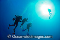 Scuba Divers doing safety stop photo