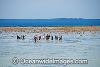 Reef walking Heron Island image