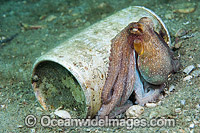 Octopus in tin can photo