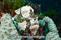 Longlure Frogfish with lure Photo - Michael Patrick O'Neill