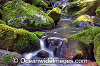 Rainforest Stream Lamington National Park Photo - Gary Bell