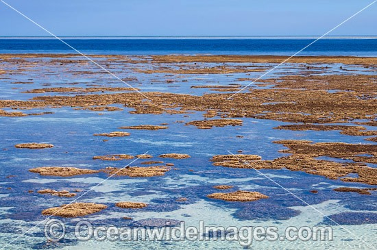 Exposed coral reef protruding out of the sea at low tide. These corals are protected from UV damage by a covering of algae that acts as a powerful