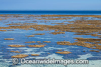 Coral Reef exposed at low tide photo
