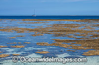 Coral Reef exposed at low tide