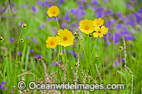 Wildflowers Photo - Gary Bell