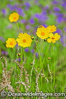Australian Wildflowers Photo - Gary Bell