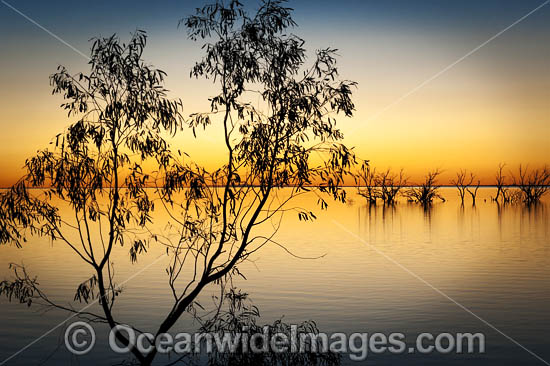 Scenic landscape showing dead River Red Gums (Eucalyptus camaldulensis), silhouetted on Lake Menindee during twilight hour after sunset. Photo taken in the outback near Broken Hill, New South Wales, Australia. Photo - Gary Bell
