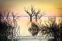 Lake Menindee at sunset photo