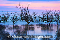 Lake Menindee at twilight photo