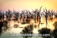 Lake Menindee at dusk