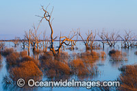 Lake Menindee at dusk sunset