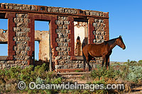 Horse near Historic Building at Silverton photo
