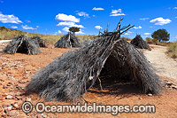 Aboriginal Shelters Yapara photo