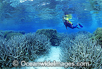 Scuba Diver exploring Staghorn Coral reef Photo - Gary Bell