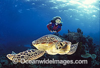 Green Sea Turtle with Scuba Diver photo