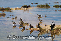 Estuary water birds Photo - Gary Bell
