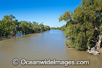 Murray Darling River in flood Photo - Gary Bell