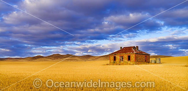 Historic and abandoned farm house, resting in a wheat field situated near Burra, South Australia, Australia.