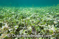 Seagrass Hopkins Island Photo - Gary Bell