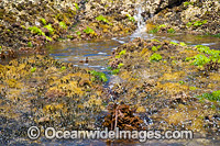 Sea Algae Hopkins Island Photo - Gary Bell