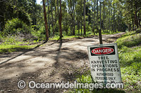 Forest Logging signage photo