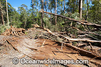 Boambee State Forest Logging photo