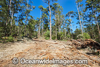 State Forest Logging Australia photo
